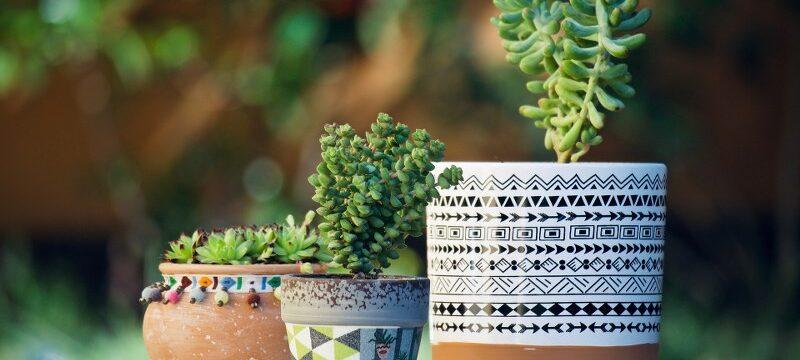 4-modi-su-come-coltivare-piante-autofiorenti-in-vaso-outodoor