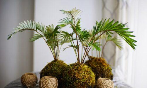 Arredamento con piante per interni semplici da mantenere